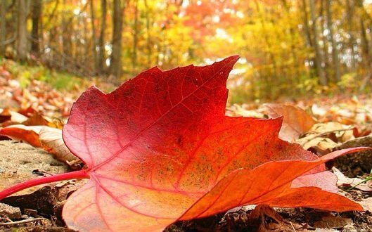 Autumn Weather Phenomena | WeatherStationary
