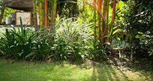 Garden Designs with bamboo | WeatherStationary.com