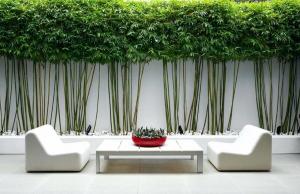 using bamboo in backyard design | WeatherStationary.com