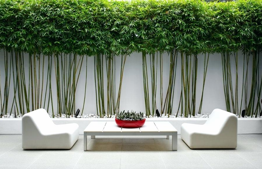 bamboo garden design | WeatherStationary.com