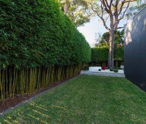bamboo hedge | WeatherStationary.com