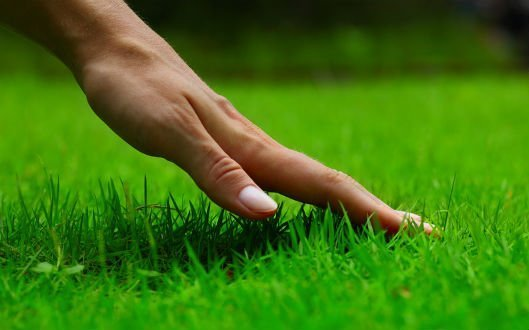 Tips and Tools in Keeping the Perfect Lawn